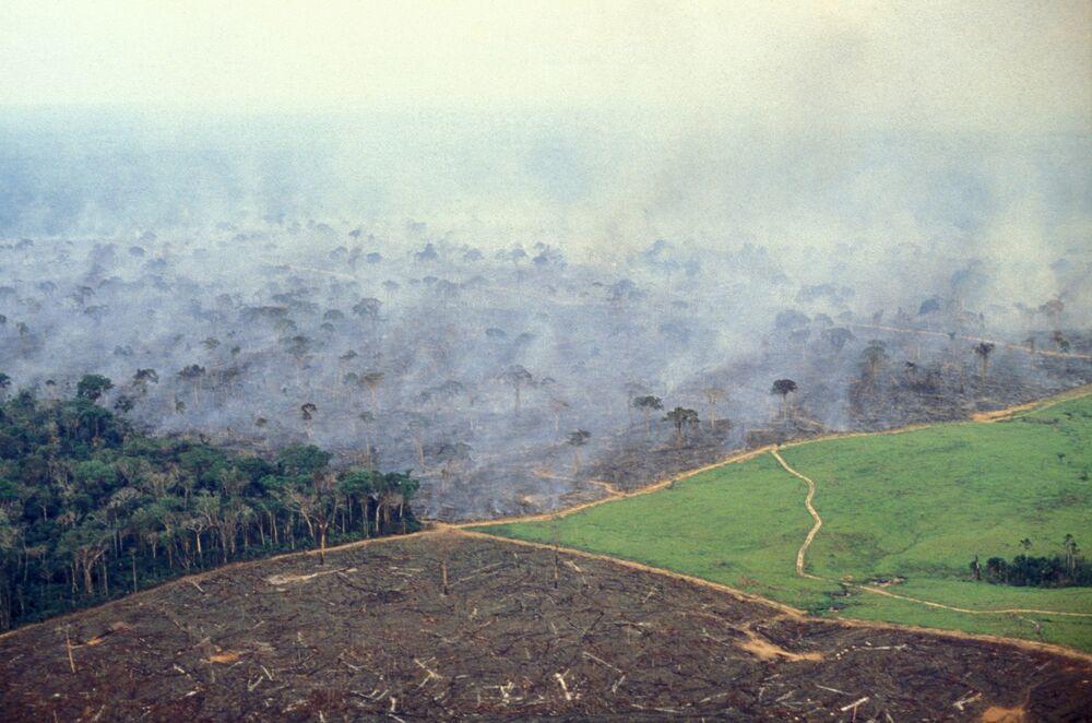 deforestation carbon emissions
