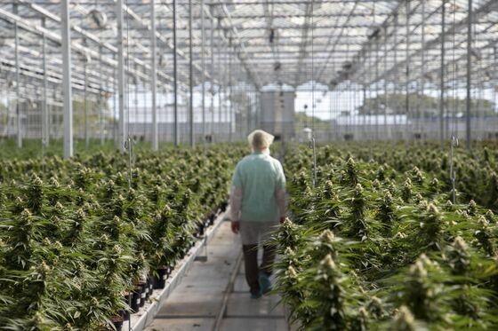 Aphria, Tilray Combine to Create Biggest Cannabis Company