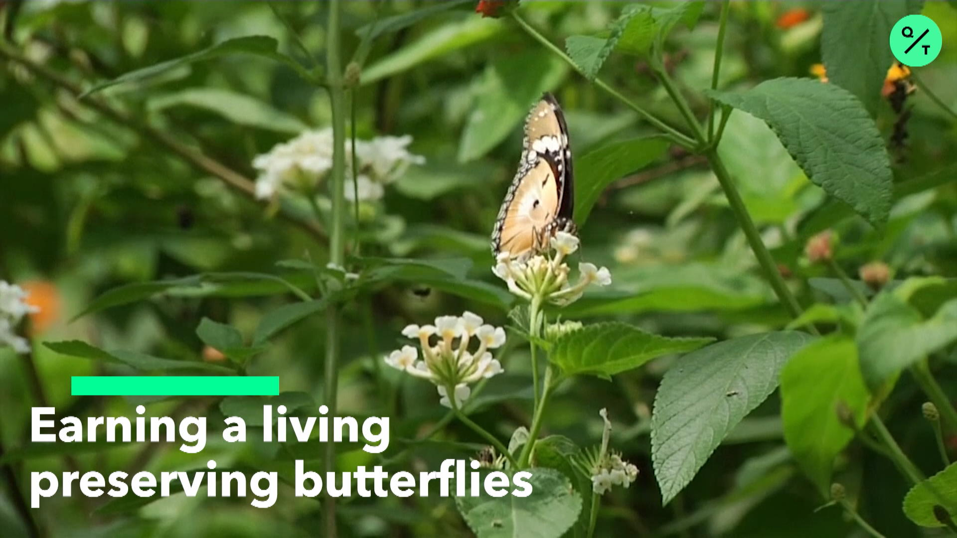 Preserving Exotic Butterflies in Kenya