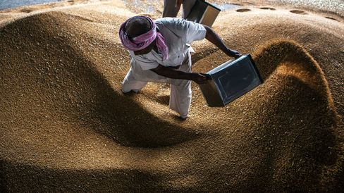Workers clean a pile of harvested wheat grain in Karnal, Haryana, India.