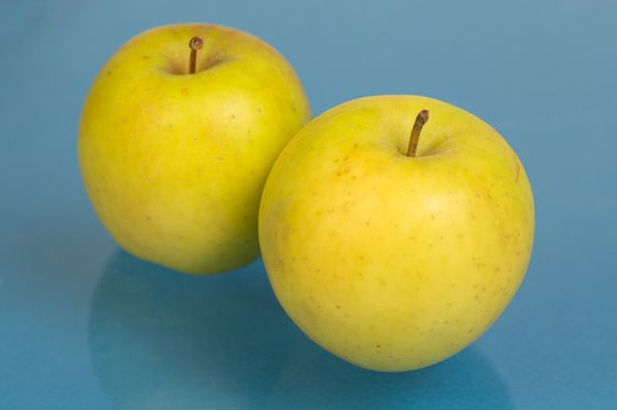 The Search for the Next Honeycrisp Apple