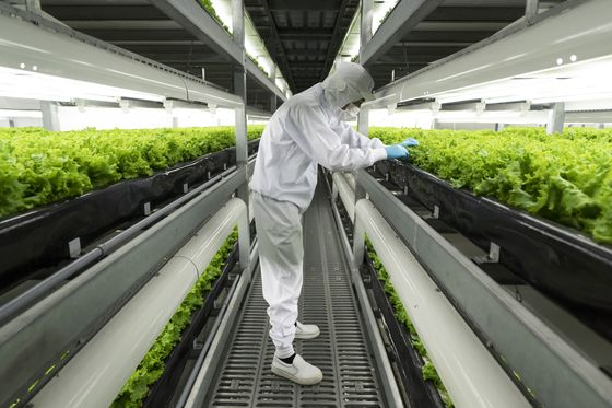 Skyscraper Farms Are About to Go Global