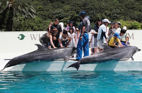 Visitors look at dolphins