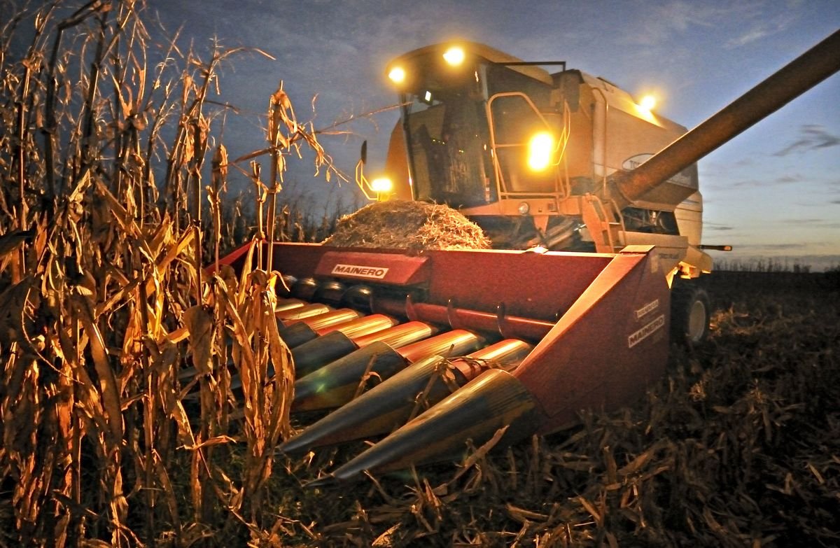 Brazilian Meat Giant Buys Foreign Corn as Local Prices Soar