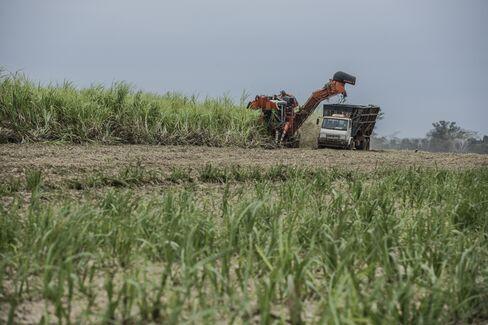 Sugarcane harvest in Brazil