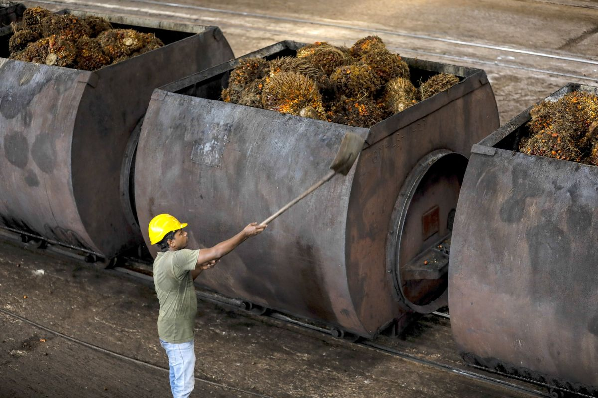 <p>Malaysia in Talks to Double Palm Oil Shipments to Afghanistan thumbnail