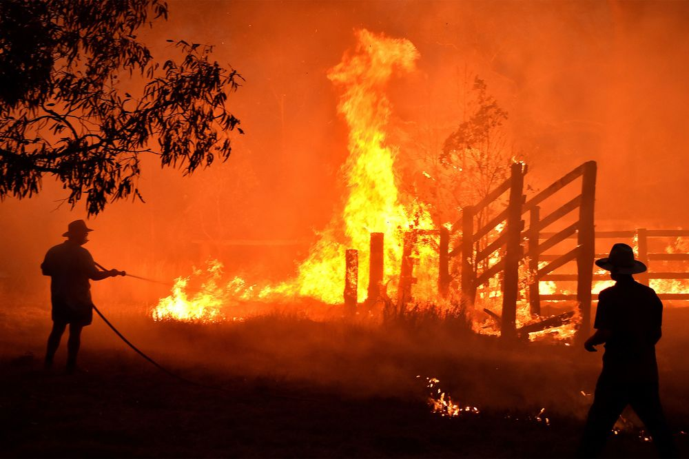 Image result for horses australia fire imagery""