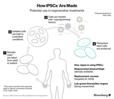 Explainer on how iPSC's cells are produced and its possible uses.