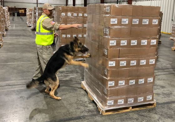 U.S. Airlines Need More Bomb-Sniffing Dogs in a Hurry