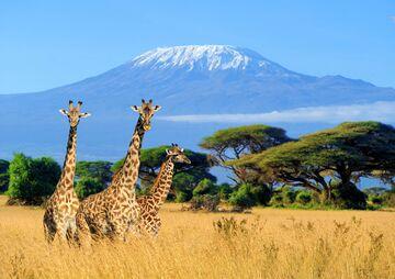 Luxury Travel Guide for Less: Agent, Expert Tips for Saving