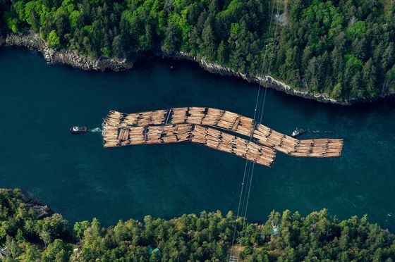 British Columbia Tree Costs Surge as Lumber Makers Move South