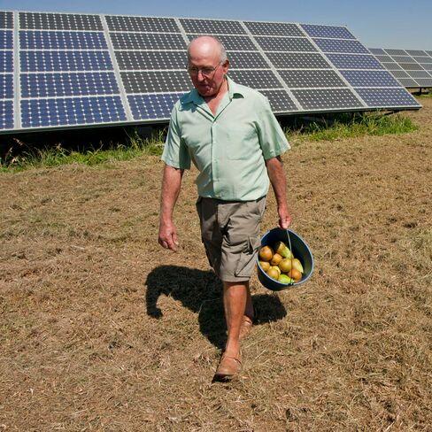 Jaume Vilimelis, a local farmer in Spain