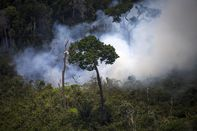 BRAZIL-GREENPEACE-TIMBER-ILLEGAL-FELLING