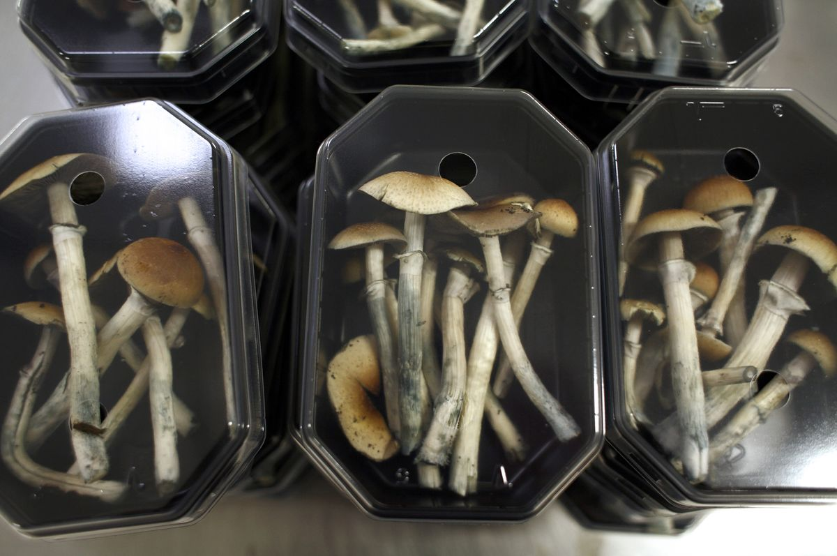 Move Over, Pot: Psychedelic Companies Are About to Go Public