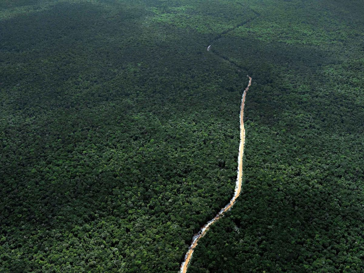 How to Make Money Off Rainforests Without Cutting Them Down