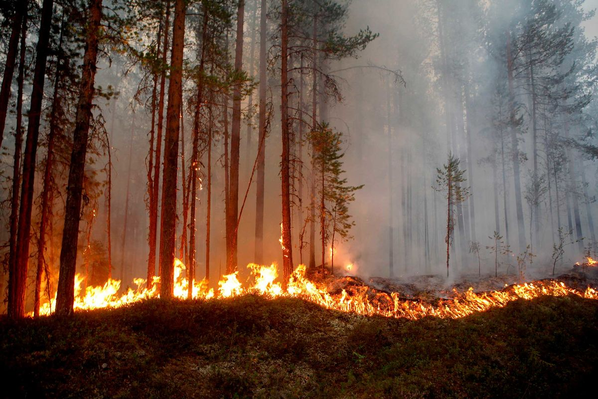 Wildfires in Sweden Signal Europe's Climate Disaster Is Growing