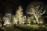 Visitors walk past illuminated trees ahead of Christmas at the Tokyo Midtown complex in Tokyo, Japan, on Wednesday, Dec. 16, 2020.