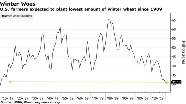 U.S. farmers expected to plant lowest amount of winter wheat since 1909