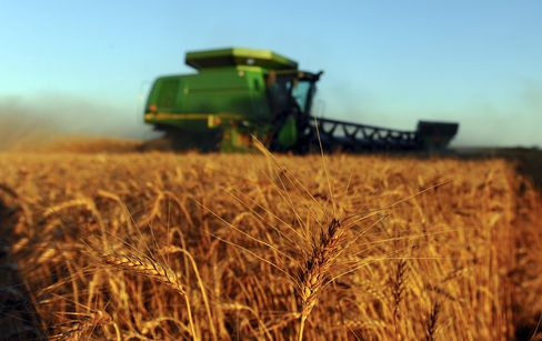Kansas Draws Record 100 to Measure Wheat in World's Top Exporter