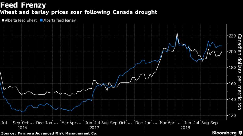 Heartbreaking' Drought Forces Canadian Ranchers to Cull