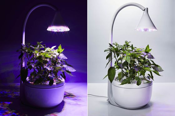 This Tiny Device Can Grow Your Salad Ingredients in 20 Days