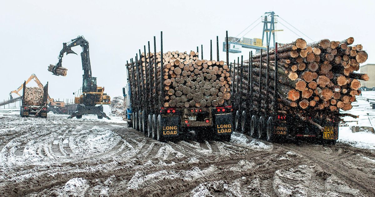 How a Canadian Timber Company Is Using U.S. Racketeering Law to Go After Greenpeace
