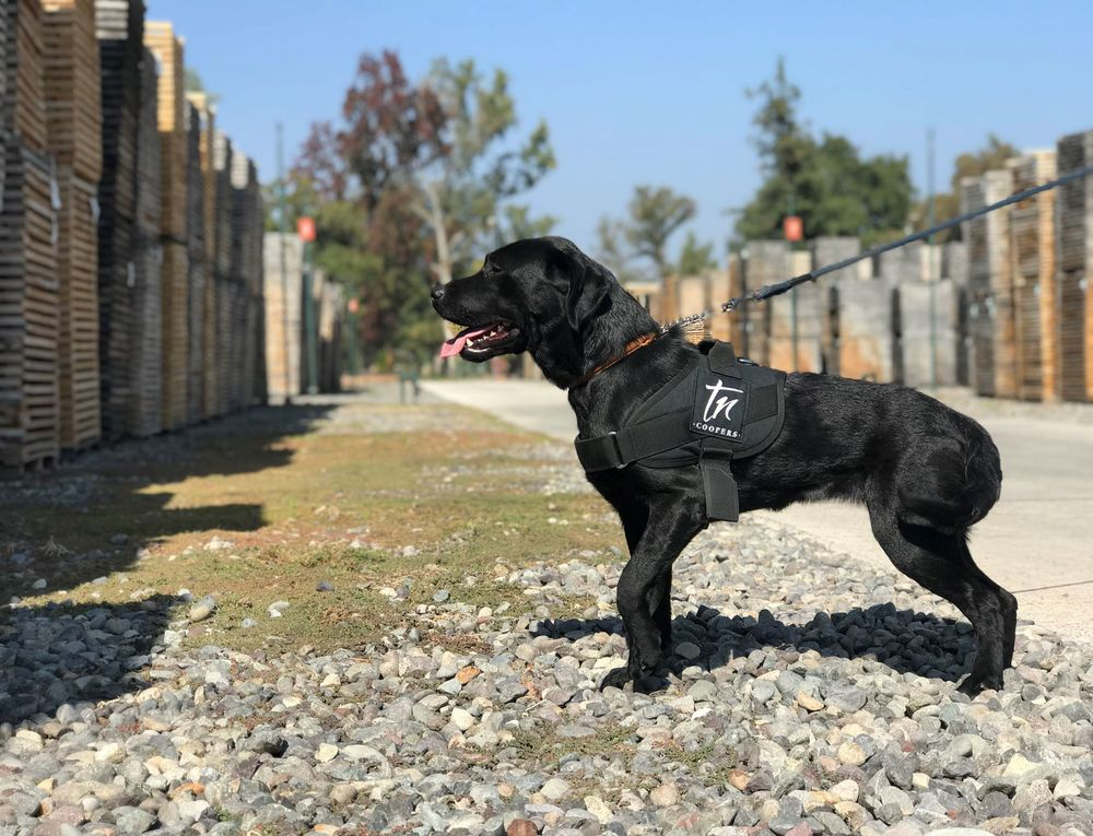 In Wine Country, Dogs Are Sniffing Out Threats to $325 Cabernet