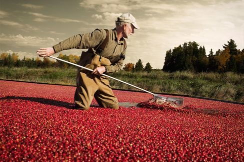 The Bittersweet Truth About Cranberries