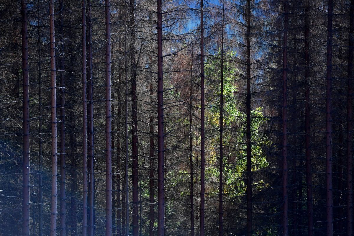 Mutual Funds in the Enchanted Forest
