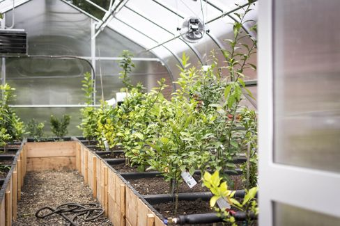 OEC grows many of its herbs in an on-site greenhouse.
