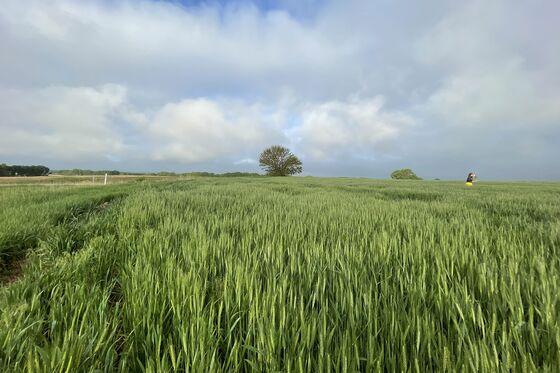 Waves of Wheat Start to Temper World Crop-Supply Worries