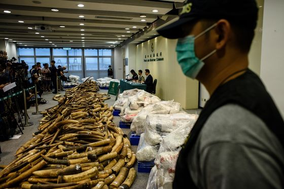 Ivory Trade Loopholes Close as Nations Race to Crush Poachers