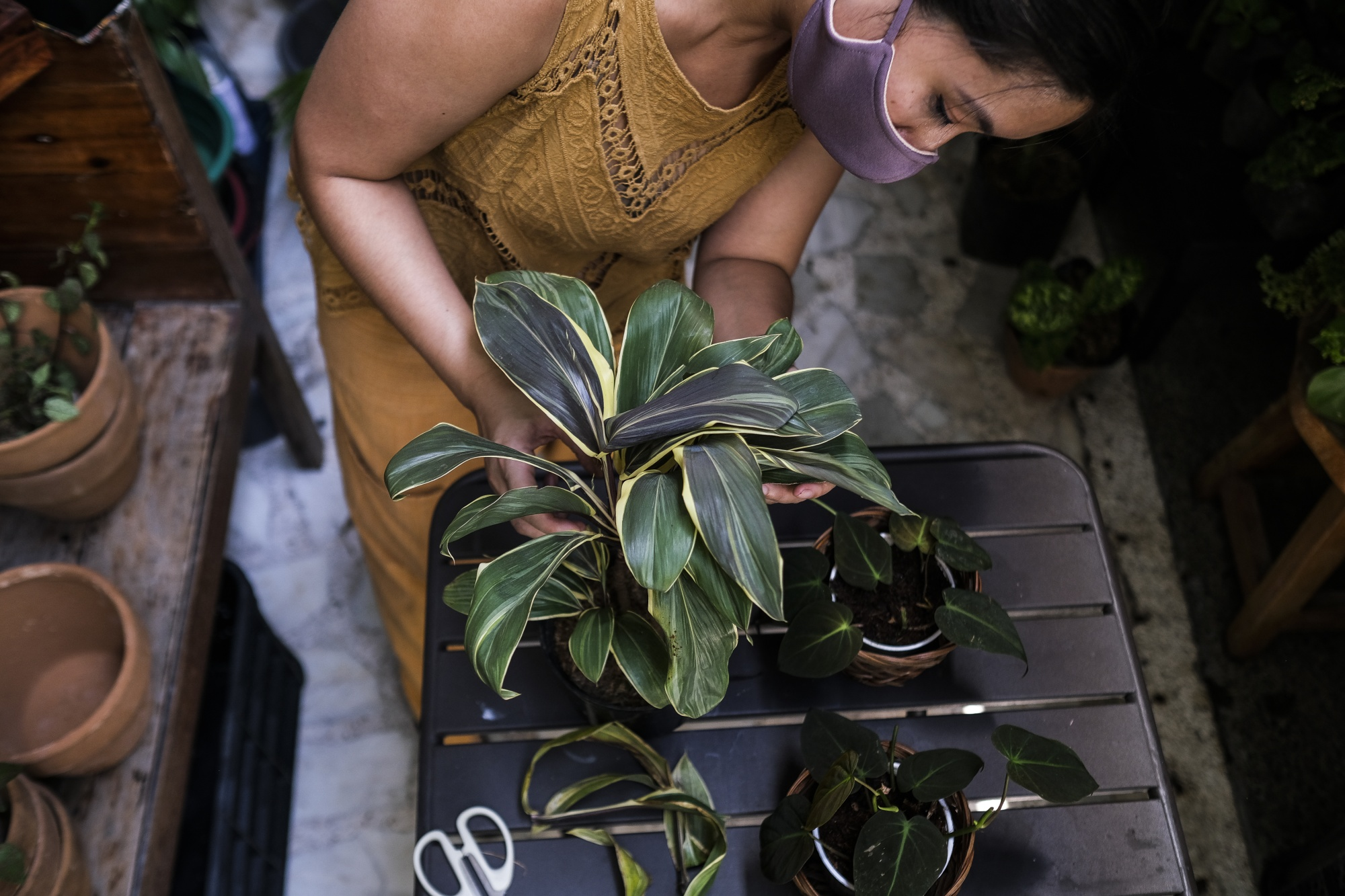 Related leaf-starved Filipinos to satisfy the thieves' forests