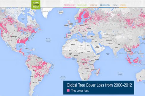 Using the Google Cloud to Stop Illegal Logging