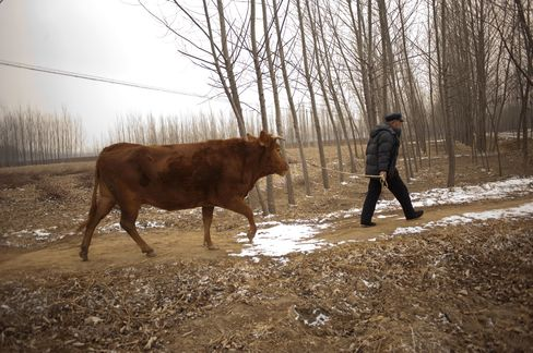 China's Snows Fail to Ease Drought