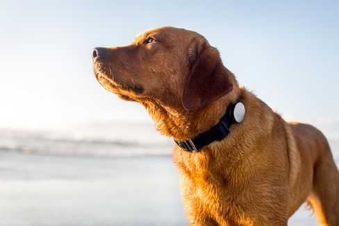 Introducing Whistle, a Fitbit for Dogs