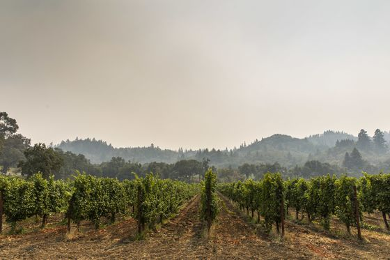 California'sWildfires Cameat the Worst Time for Wine Industry