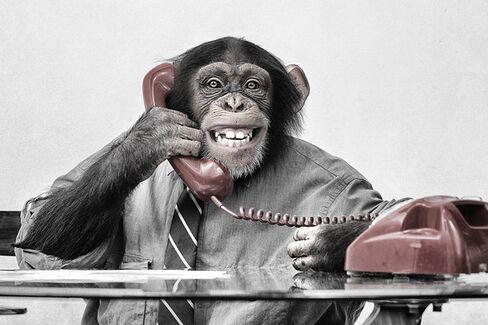 The Myth of Monkey Boss Stress