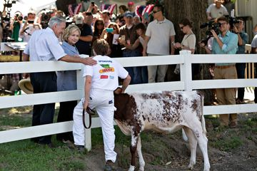 Hillary Clinton, former U.S. secretary of state and democratic candidate for U.S. president, and Tom Harkin, former Iowa Democratic Senator, talk to a show cow handler during the Iowa State Fair in Des Moines, Iowa, U.S., on Saturday, Aug. 15, 2015. Clinton said today she doesn't see the continued scrutiny of her e-mail practices while heading the State Department as a liability for her campaign for the White House. Photographer: Daniel Acker/Bloomberg