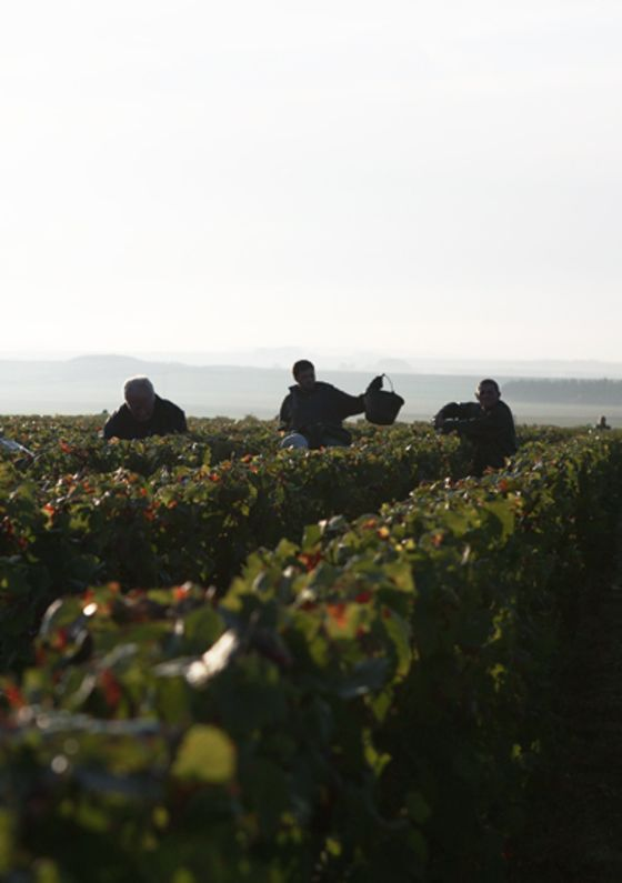 Champagne With No Bubbles? Thank Climate Change