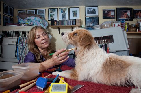 Odd Jobs: Animal Colorist