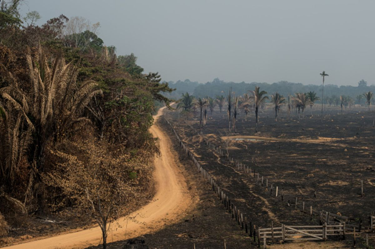 Torching Farmers and Ranchers Won't Stop Fires in the Amazon