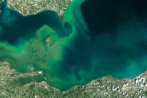 A toxic algal bloom in Lake Erie in 2014.