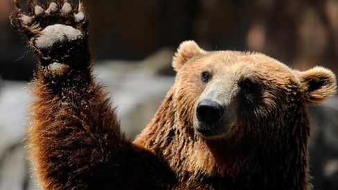 Meet the Bear Hungry for a Bull Market Correction