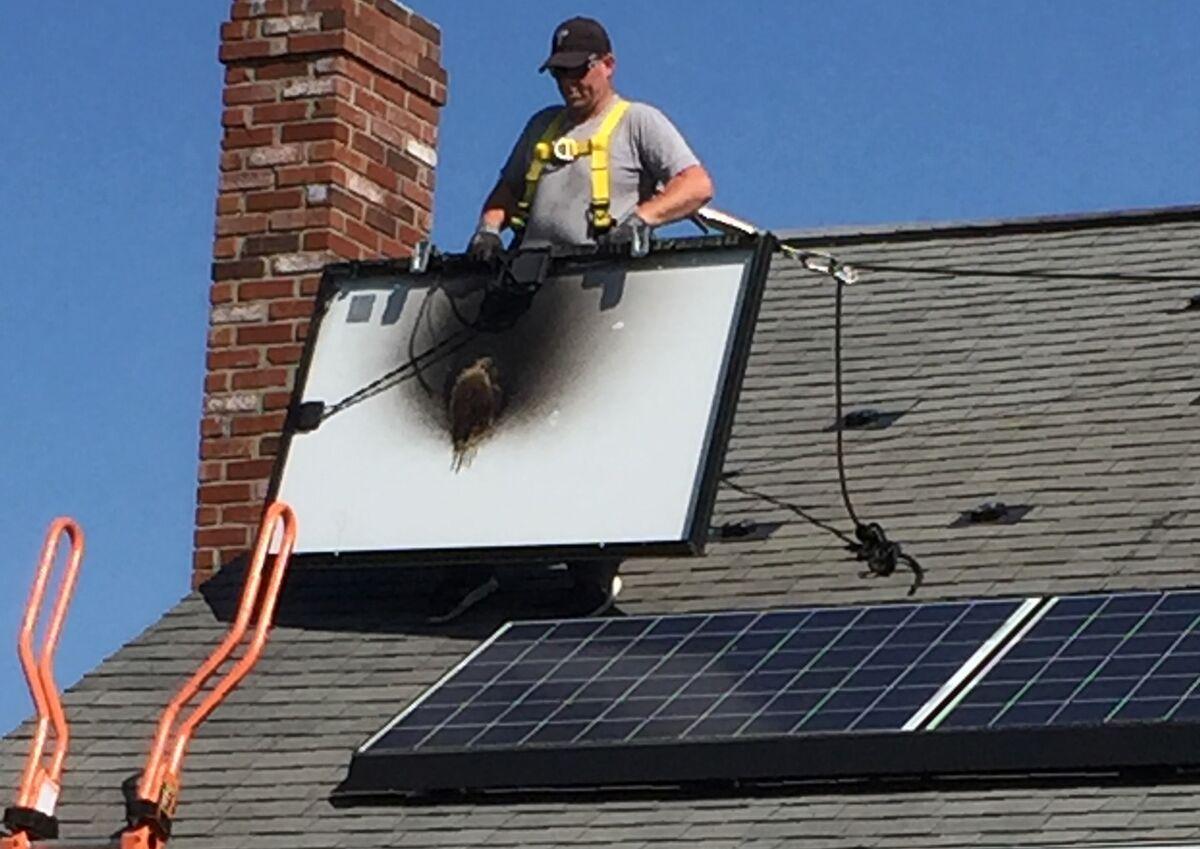 Tesla Solar Shingles Wiring from assets.bwbx.io