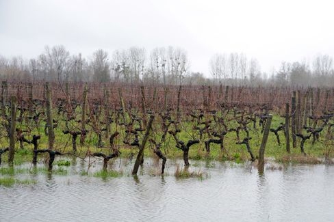 Climate Change, Winter Storms, and the Future of European Wine