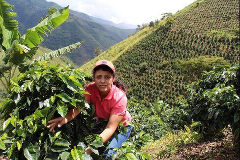 Astrid Medina On Her Coffee Farm