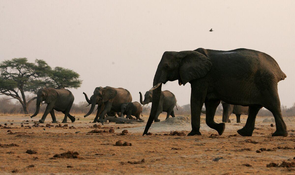 Zimbabwe Ready to Sell Elephants to 'Anyone Who Wants Wildlife'