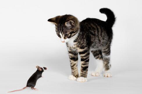 Uncertain Kitten