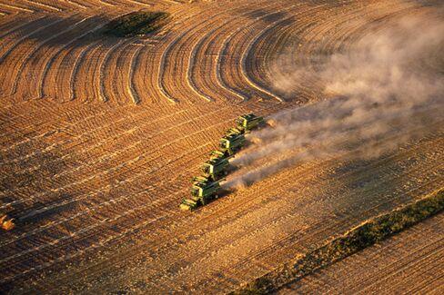 Canada's Corn Belt Attracts the Hot Money